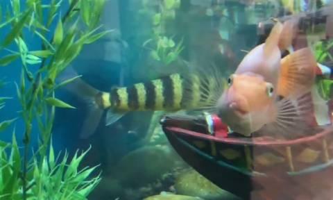 Το πιο τρομακτικό ψάρι που έχετε δει! (vid)
