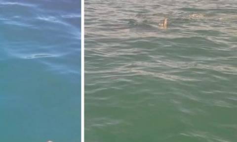 Σκληρές εικόνες: Καρχαρίας επιτίθεται σε φώκια μπροστά σε ψαρά (Video)
