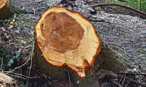 Τραγωδία στην Άρτα: Τον σκότωσε το δέντρο που έκοβε