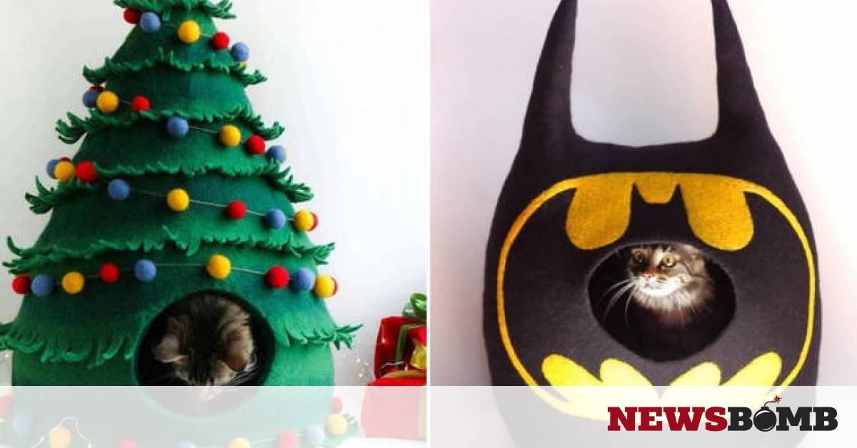 6f1204e1c6a7 Έχεις γάτα  Με αυτό το δώρο θα την κάνεις ευτυχισμένη! - Newsbomb