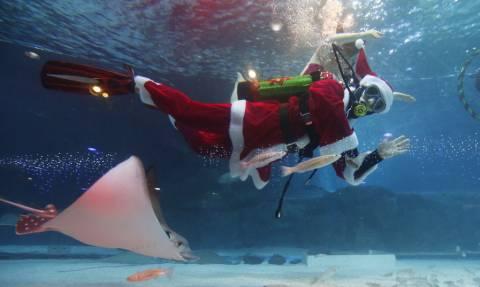 Όταν ο Άγιος Βασίλης πήγε για μια... βουτιά (pics)