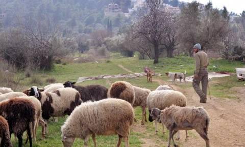 Πότε θα δοθεί η οικονομική ενίσχυση σε αγρότες και κτηνοτρόφους