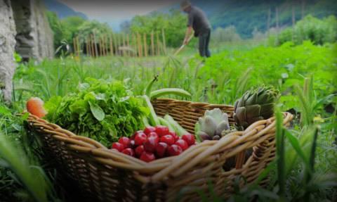 Πότε και πόσα χρήματα θα δοθούν για τη βιολογική γεωργία