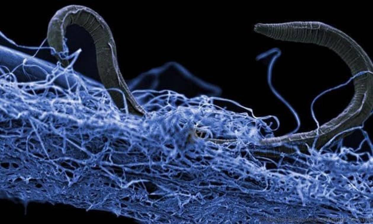 Αρχαία απειλή στοιχειώνει τον πλανήτη μας: Μικρόβια - ζόμπι ζουν στο σκοτάδι κάτω από τα πόδια μας