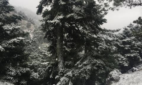 Σύντομη... καιρική ηρεμία μέχρι τις χιονοπτώσεις της Πέμπτης! Ο καιρός έως τη Δευτέρα...