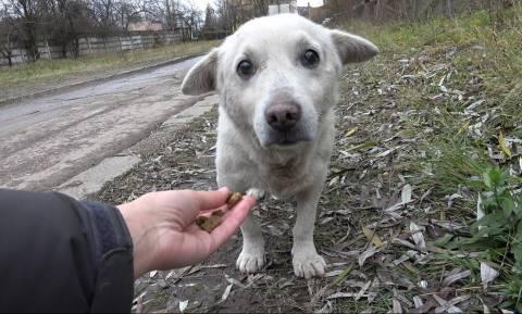 Ιστορία γραφειοκρατικής τρέλας: Φιλόζωη γυναίκα κινδυνεύει με φυλάκιση επειδή τάιζε αδέσποτα σκυλιά