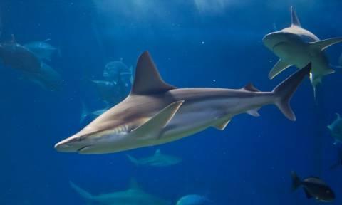 Ψαράδες έρχονται αντιμέτωποι με μεγάλο καρχαρία (pic+vid)