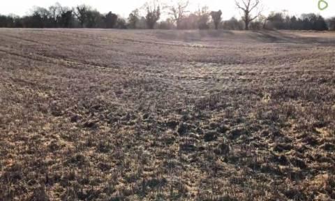 Ο χειρότερος εφιάλτης! Εντοπίστηκε χωράφι γεμάτο… ιστούς αράχνης (vid)