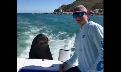 Τι κάνει ένας θαλάσσιος λέοντας όταν δεν θέλει selfie; (vid)