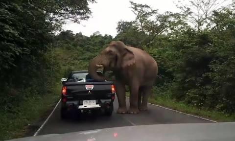 Τρομοκρατημένη οικογένεια παρακολουθεί… ελέφαντα να τους ληστεύει (vid)