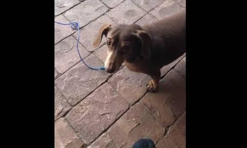 Ο σκύλος που δεν συμπαθεί τους γείτονες του και το δείχνει! (vid)