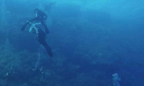 Ηθελαν να δουν από κοντά καρχαρία... Τελικά τον είδαν να τρώει το πόδι μέλους της ομάδας (vid)