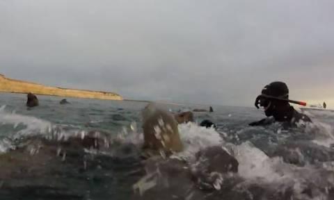 Η απίστευτη αντίδραση ενός θαλάσσιου λιονταριού όταν είδε από πολύ κοντά έναν δύτη! (vid)