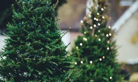 Χριστούγεννα 2018: Σπίτι... υπερθέαμα με 50.000 λαμπάκια! (vid)
