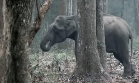 Έπιασαν αυτόν τον ελέφαντα να... καπνίζει! (vid)