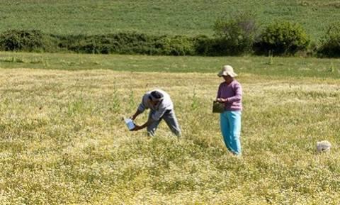 Είστε άνεργος ή αγρότης: Δείτε αν δικαιούστε δωρεάν στρέμματα γης