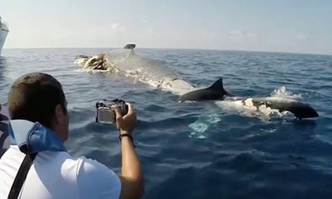 Βρήκαν μια νεκρή φάλαινα να επιπλέει στην θάλασσα. Οταν έβαλαν την υποβρύχια κάμερα έπαθαν σοκ (vid)