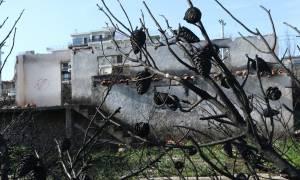 Μάτι: Έρημη πόλη έξι μήνες μετά τη φονική πυρκαγιά με τους 100 νεκρούς (pics)
