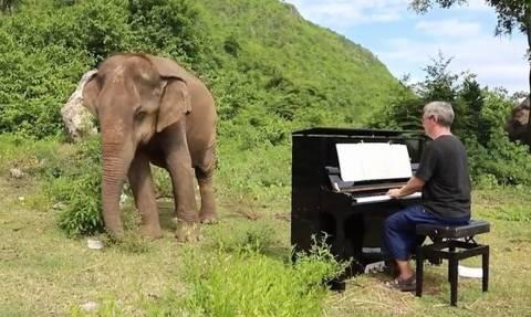 Πιανίστας παίζει το «Άγια Νύχτα» σε ελέφαντα! Δεν θα πιστέψετε πώς αντέδρασε!