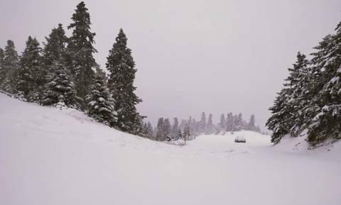 Καιρός ΤΩΡΑ: Πυκνή χιονόπτωση στον Παρνασσό – Πάνω από 20 εκατοστά το ύψος του χιονιού (pics+vid)