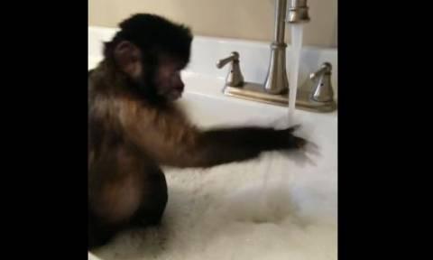 Ένας κηβίνος που λατρεύει να κάνει μπάνιο μόνος του (vid)