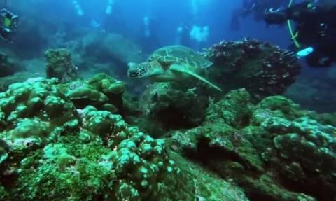Ο μαγευτικός βυθός των νησιών Γκαλαπάγκος (vid)
