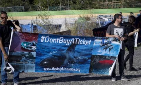 Ένταση και επεισόδια σε διαμαρτυρία στο Αττικό Ζωολογικό Πάρκο για τη θανάτωση των τζάγκουαρ