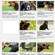 e0dd99dba4d Επίθεση σκύλου σε κοριτσάκι 3 ετών: Η ζωοφιλία του χαβαλέ οδηγεί σε δράματα