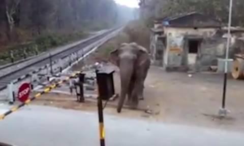 Ελέφαντας θέλει να περάσει από γραμμές τρένου! Αυτό που κάνει θα σας αφήσει άφωνους (Video)