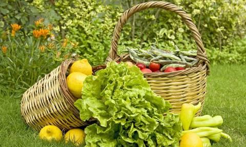 Πότε ξεκινούν οι αιτήσεις επιχορήγησης για τις «βιολογικές καλλιέργειες»