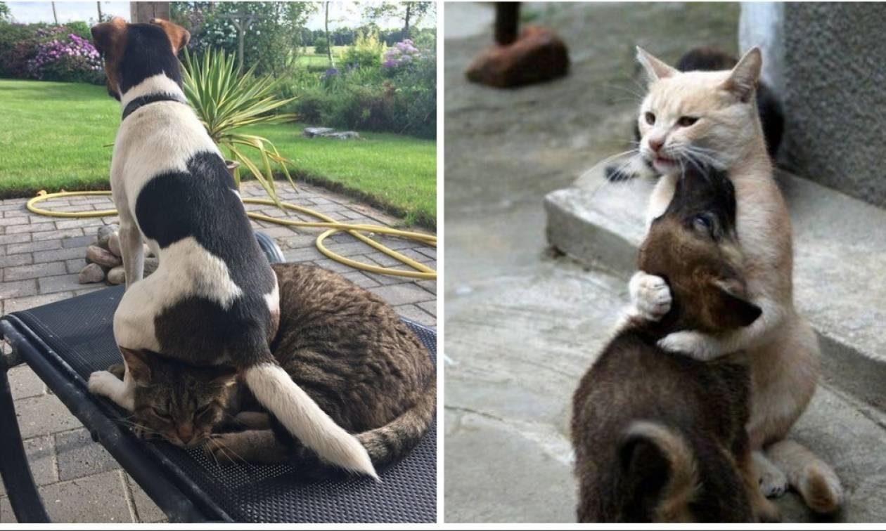 Σκύλος και γάτα αγκαλιασμένοι σε σπαρταριστές φωτογραφίες!