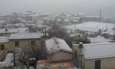 Καιρός: Στα λευκά η Μυτιλήνη - Σε συναγερμό οι υπηρεσίες του Δήμου (pics)