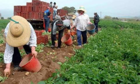 Ποια κατηγορία αγροτών δικαιούται επιστροφή ΦΠΑ