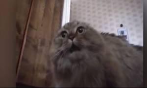 Ξεκαρδιστήκαμε: ΔΕΝ έχετε ακούσει πιο περίεργο νιαούρισμα γάτας!