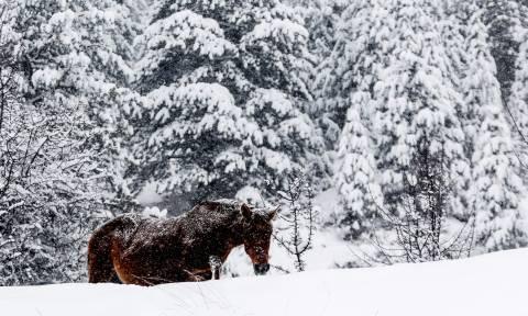 Στην... κατάψυξη όλη η Ελλάδα - Πού έδειξε το θερμόμετρο -19 βαθμούς - Έρχεται νέος χιονιάς