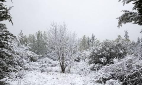 Καιρός: Διακοπή κυκλοφορίας λόγω παγετού στο Πόρτο Γερμενό