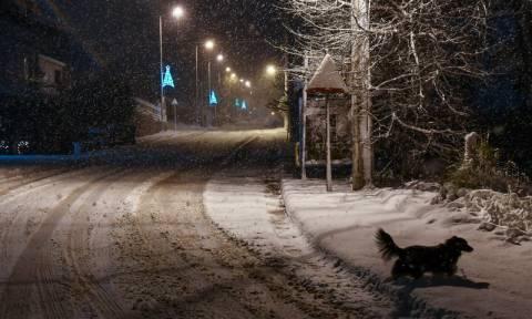 Καιρός Live: Λευκό τοπίο σε όλη την Αθήνα - Χιόνια και στο κέντρο, έκλεισαν δρόμοι (pics)
