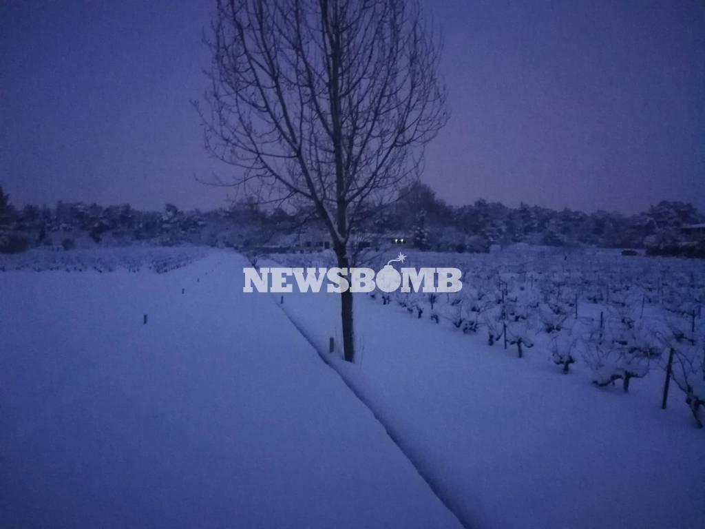 Καιρός: Στα λευκά όλη η Αθήνα - Υπέροχες εικόνες από τη χιονισμένη πρωτεύουσα