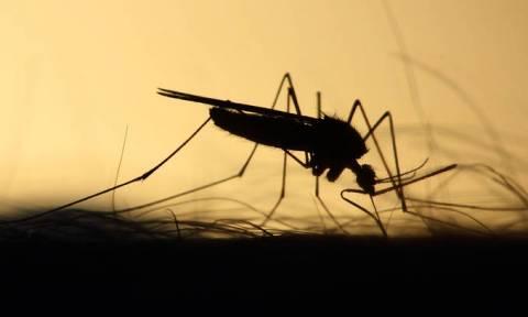 Τέλος στον εφιάλτη των… κουνουπιών: Έτσι θα απαλλαγούμε μια και καλή από αυτά!