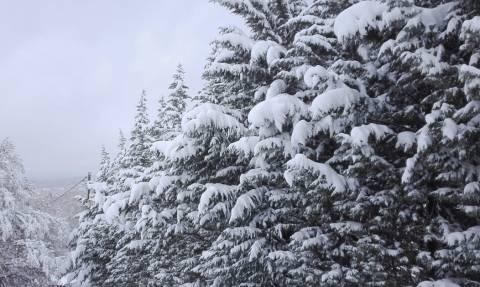 Καιρός: Πού θα σημειωθούν πυκνές χιονοπτώσεις το Σάββατο! Ο καιρός μέχρι την Τετάρτη... (video)