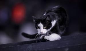 Η γάτα που σπάει τα στερεότυπα και ταΐζει το σκύλο του σπιτιού (vid)