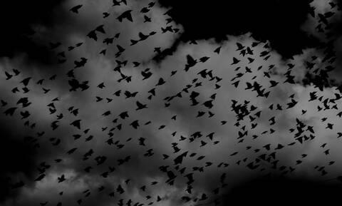 Μαγευτικό θέαμα: Σμήνος πουλιών σχημάτισε στον ουρανό πελώρια φάλαινα (videos)