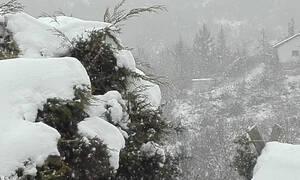Καιρός: Θα χιονίσει και στον αστικό ιστό του Λεκανοπεδίου. Η εκτίμηση του Τάσου Αρνιακού (video)