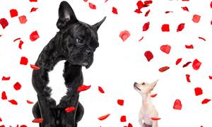 Σήμερα 17/1: Λογική μην ψάχνεις στον ερωτευμένο!