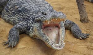 Κροκόδειλος κατασπάραξε τη γυναίκα που τον τάιζε (photos)
