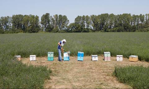 Πότε ξεκινούν οι αιτήσεις  για το εθνικό πρόγραμμα μελισσοκομίας - Τι δικαιολογητικά χρειάζονται