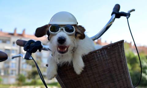 Ούτε που φαντάζεστε πού έβαλε τον σκύλο του για να τον πάει βόλτα με το ποδήλατο (vid)