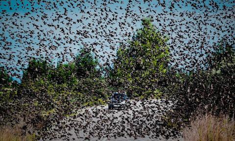 Σπάνιες εικόνες: Σμήνη από αγριοπούλια... κατέλαβαν δρόμο στην Αταλάντη! (pics)