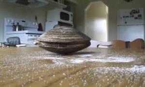 Η αχιβάδα και το αλάτι: Το βίντεο που έκανε εκατομμύρια views σε χρόνο ρεκόρ!