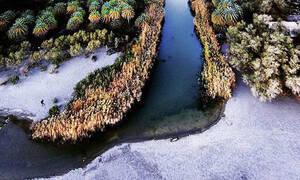 Μαγική εικόνα από το χιονισμένο Φοινικόδασος της Πρέβελης στο Ρέθυμνο.